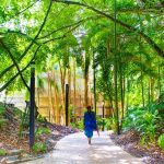 Complete Guide to Markets of Far North Queensland
